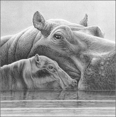 Baby Love - Hippos
