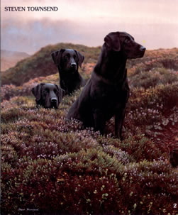 Return of the Three Musketeers - Black Labradors
