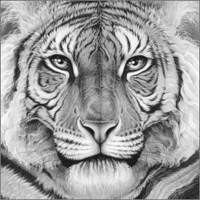Majesty - Royal Bengal Tiger