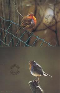 Robins - Set Of 2