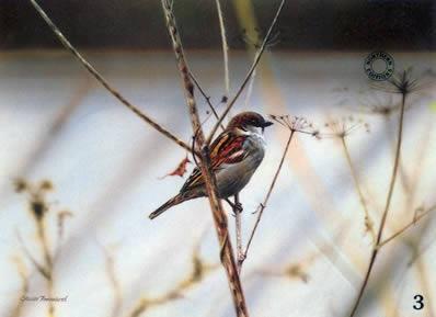 Study Of A Sparrow