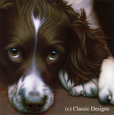 Larger Than Life - Springer Spaniel II (Bc)