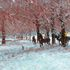 old: First Snow, Hyde Park Horses - Canvas