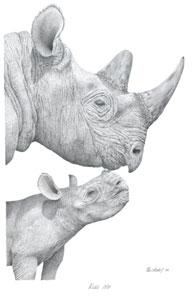 Kiss Me - Rhinos