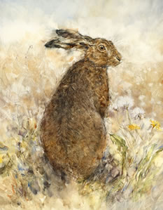 The Curious Hare