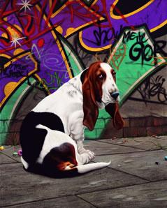 Dog End Street