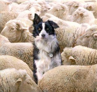 I See No Sheeps