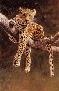 Hypnotic - Leopard