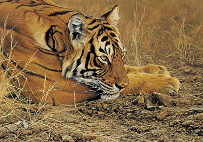 Always Alert - Tiger
