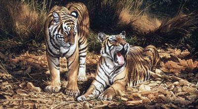 Son & Heir (On Canvas) - Tigers