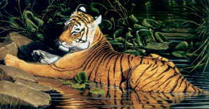 Reflections Of India (On Cavas) - Tiger