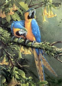 Blue & Gold Macaw - Parrots