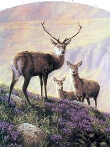 Highland Majesty
