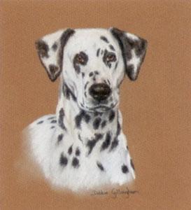 Dalmatian Study