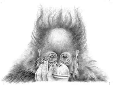 Split Ends - Orangutan