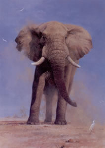 My Savuti Friend - Elephant