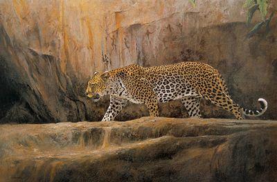 Leopard At Bushman Rock