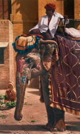 Amber Lady - Elephant