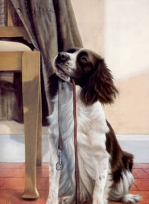 Anticipation - Springer Spaniel
