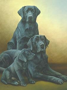 Generations - Black Labradors