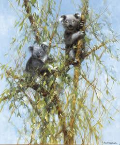 Up A Gum Tree - Koalas
