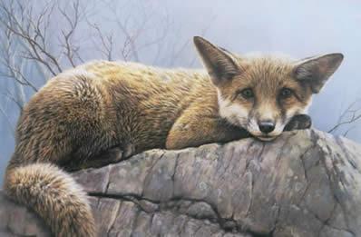 First Winter - Fox