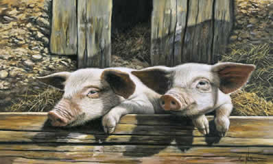 Twins - Pigs