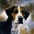 Portrait of a Hound by John Trickett