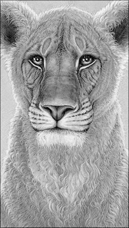 The Spirit Of Elsa - Lioness