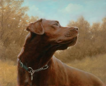 Hot Chocolate - Chocolate Labrador