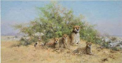 Cheetah Family - In The Serengeti