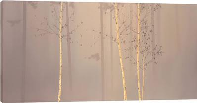 Enchanted Woods I