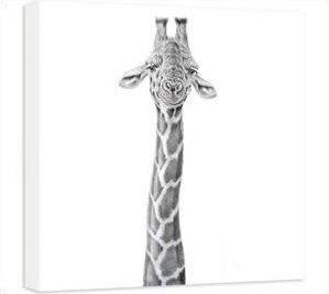 Dizzy Heights - Giraffe