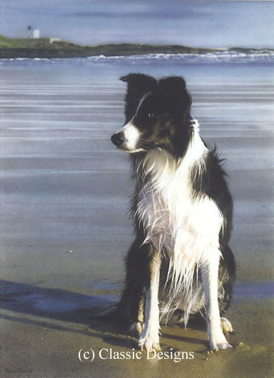 Waiting For Stan (Border Collie)