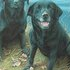 labrador: Keepers Finders