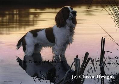 Jasper (Springer Spaniel)