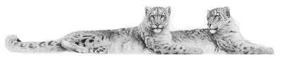 Soulmates - Snow Leopards