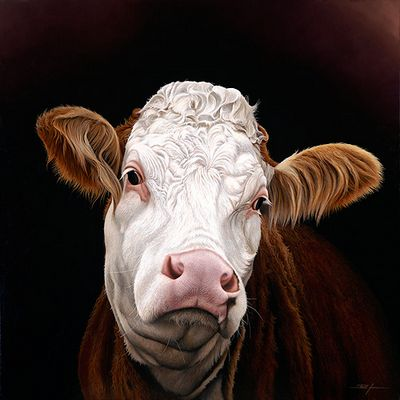 Madge (Pedigree Simmental Cow)