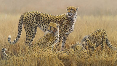 Watching For Scavengers - Cheetahs