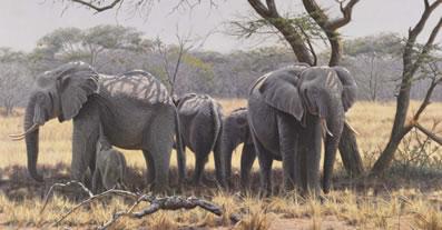Taking Shade - Elephants (Canvas)