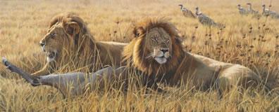 The Coalition - Lions (Canvas)
