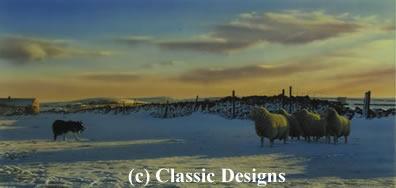 Mac At Work (Border Collie & Sheep)
