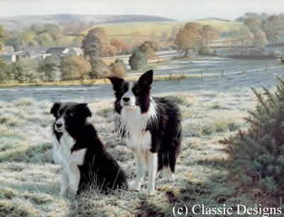 Best Friends - Border Collies