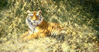The Ranthambore Tiger